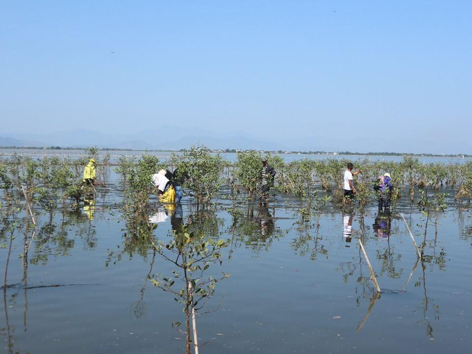 Làm vệ sinh rừng ngập mặn ở thôn Vĩnh Trị